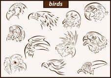 Illustration shows a birds. Set of a vector illustration shows a birds royalty free illustration