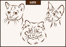 Illustration shows a cats. Set of a vector illustration shows a cats breed royalty free illustration