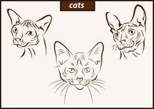 Illustration shows a cats. Set of a vector illustration shows a cats breed vector illustration