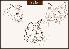 Illustration shows a cats. Set of a vector illustration shows a cats breed stock illustration