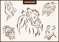 Illustration shows a mammals Royalty Free Stock Photography