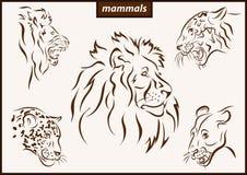 Illustration shows a mammals. Set of a vector illustration shows a mammals lion, tiger, leopard stock illustration