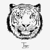 Tiger black. Illustration of a silhouette of the head of beautiful tiger Stock Photos