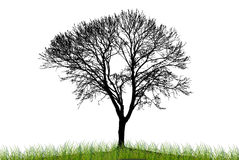 Illustration silhouettes of trees Royalty Free Stock Photos