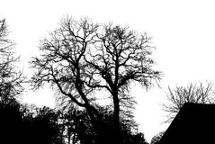 Illustration silhouettes of trees Stock Images