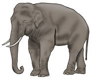 Illustration simple d'éléphant asiatique Photo libre de droits