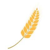 Illustration simple de vecteur d'oreille d'or de blé illustration stock
