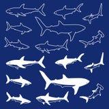 Illustration of a simple shark