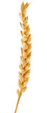 Illustration with single gold ear of wheat Royalty Free Stock Image