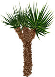 Single green palm tree with small crown Stock Image
