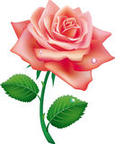 Illustration of single rose Stock Photos