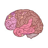 Illustration with  sketch of the human brain Stock Photography