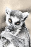 Illustration sketch of  lemur made with digital tablet Royalty Free Stock Photo