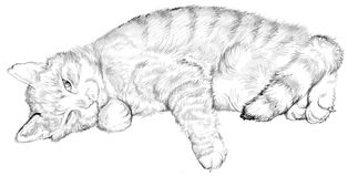 Illustration of a sleeping cat, black and white drawing. Stock Photo