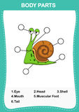Illustration of snail vocabulary part of body Stock Images