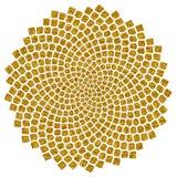 Solrosen kärnar ur - det guld- förhållandet - guld- röra sig i spiral - fibonacci röra sig i spiral Royaltyfria Foton