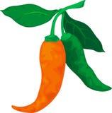 Illustration Spicy Stock Photo