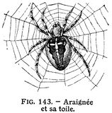 Illustration of spider Royalty Free Stock Photography