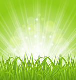 Spring background with green grass Stock Photography