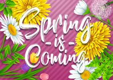 Spring is coming. Spring wording with various flowers on striped purple background. Illustration of Spring is coming. Spring wording with various flowers on Stock Photos