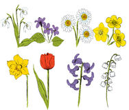 Illustration of Spring Flowers set Royalty Free Stock Image