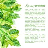 Illustration of spring leaves. watercolor angular composition. Stock Photos