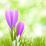 Spring little flowers background Stock Image