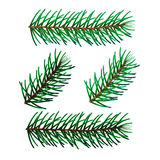 Illustration of Spruce twigs Stock Photo