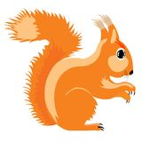 Illustration of the squirrel Stock Photos
