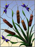 Stained glass illustration with bouquet of bulrush and dragonflies on a sky background. Illustration in stained glass style with bouquet of bulrush and vector illustration