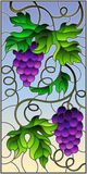 Stained glass illustration with a bunch of red grapes and leaves on a sky  background,vertical image. The illustration in stained glass style painting with a Royalty Free Stock Photography