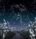 Illustration of a starry sky over a field. With flowers royalty free illustration
