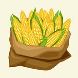 Illustration of stylized sack with fresh ripe corn Royalty Free Stock Images