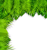 Illustration Summer Nature Background with Green Tropical Leaves Royalty Free Stock Image