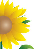 Illustration of sunflower Royalty Free Stock Image