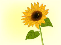Illustration of sunflower in bloom. Illustration of bright yellow sunflower in bloom Royalty Free Stock Images