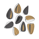 Illustration of sunflower seeds. For design Stock Image