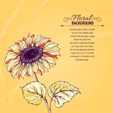 Illustration of sunflower. Stock Photography