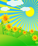 The Illustration sunflowers on meadow Royalty Free Stock Photo
