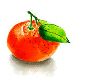 Illustration tangerine Stock Photo