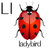 Illustration for teaching children the English alphabet with cartoon ladybird. The letter L. Stock Photo