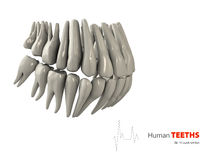 Illustration of Teeths , medicine and health concept design element. Royalty Free Stock Photography