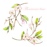 An illustration with the tender pink blooming flowers on the branches with the green leaves painted in watercolor. An illustration with an isolated tender pink Stock Photo