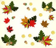 Illustration on the theme of autumn, leaves, oak, maple, and acorns Royalty Free Stock Image