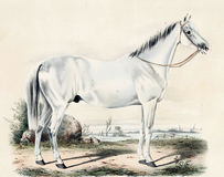 Illustration of thoroughbred horses. Album breeders with portraits of factory Jerez. - SPB., 1847 Royalty Free Stock Image