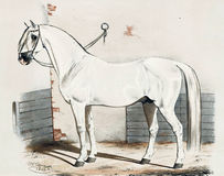 Illustration of thoroughbred horses. Album breeders with portraits of factory Jerez. - SPB., 1847 Stock Photos