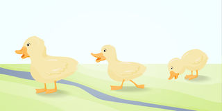 The illustration  three cute duckling. Stock Photography