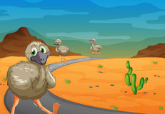 Emu in desert Royalty Free Stock Images