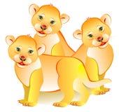 Illustration of three little lions. Stock Photo