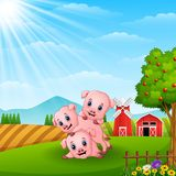 Three little pig playing in the farm Stock Images